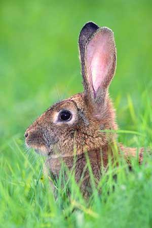 Risultati immagini per incontro con una volpe e una lepre